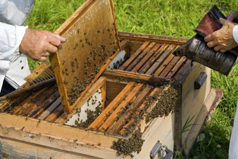 Αιτήσεις για την κορωνο-ενίσχυση σε παραγωγούς μελιού, χοίρου