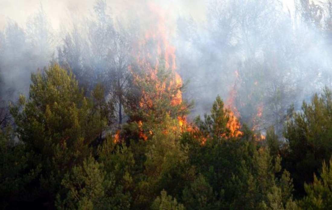 Φωτιά σε δάσος, στα όρια Ιωαννίνων και Γρεβενών