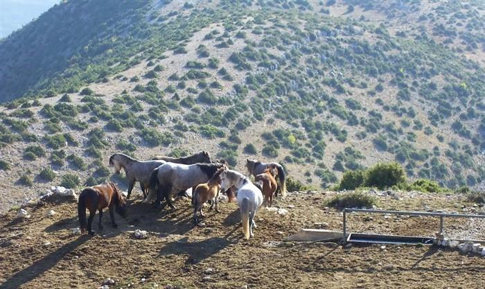 EpirusPost • Ειδήσεις, Ιωάννινα, Άρτα, Πρέβεζα, Θεσπρωτία • agria aloga souli