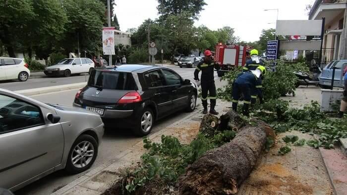 «Κατέρρευσε» δέντρο… αποφεύχθηκαν τα χειρότερα