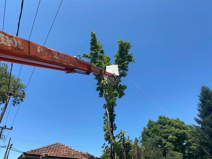 Επιχείρηση… δέντρο!