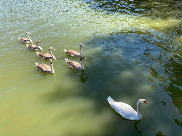 EpirusPost • Ειδήσεις, Ιωάννινα, Άρτα, Πρέβεζα, Θεσπρωτία • kiknoi mavili oikogeneia1