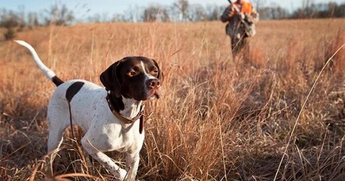 Στο ΦΕΚ η νέα Ρυθμιστική για το κυνήγι