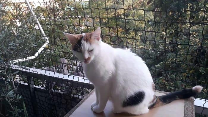 Είχε δέσει γάτες με λουρί στο μπαλκόνι του!