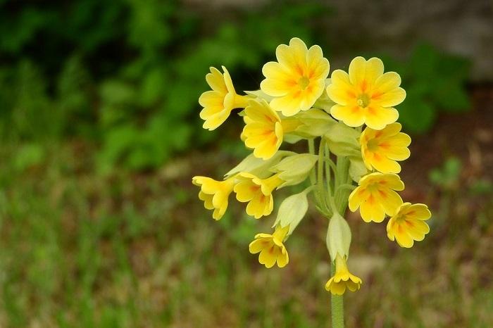 Αναζητώντας το «λουλούδι του Δαρβίνου» από την Σουηδία ως την Πίνδο