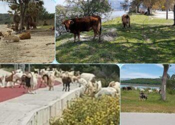 EpirusPost • Ειδήσεις, Ιωάννινα, Άρτα, Πρέβεζα, Θεσπρωτία • drepano kopadia