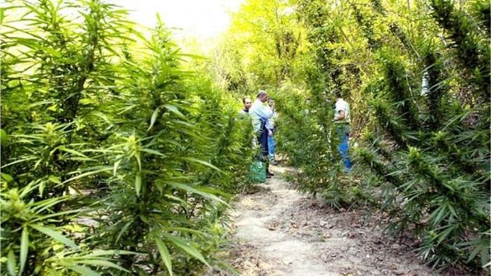 «Κόμβος» στη διακίνηση και την παραγωγή ναρκωτικών η Αλβανία