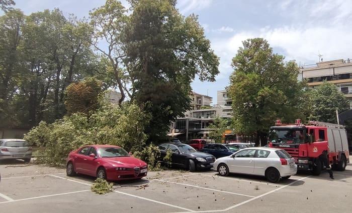 Κατέρρευσε δέντρο στο Grand Serai, ζημιές σε αυτοκίνητα- ΦΩΤΟ