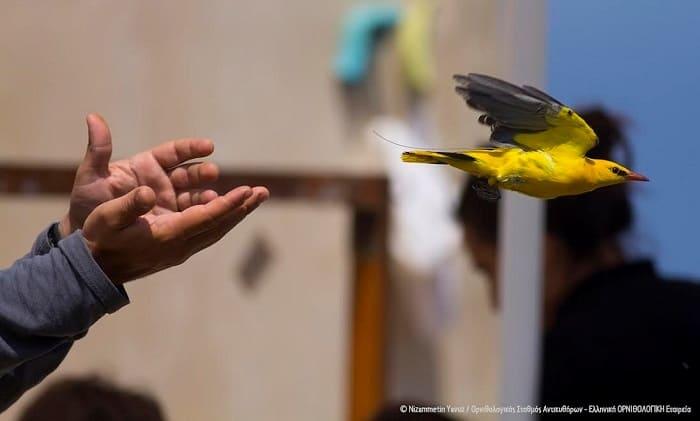 Υπό… παρακολούθηση τα μεταναστευτικά πουλιά!