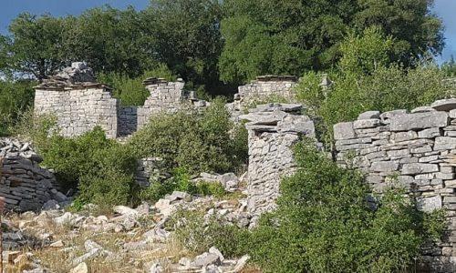 dafnoula