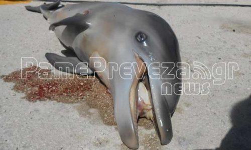 delfini nekro