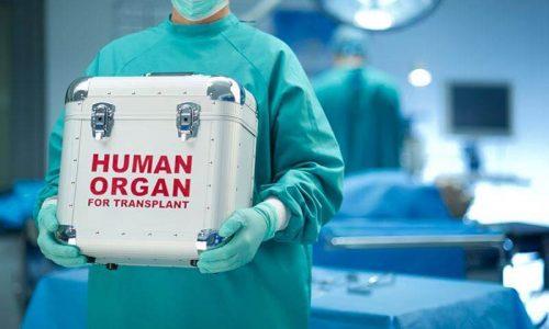 dorea organon