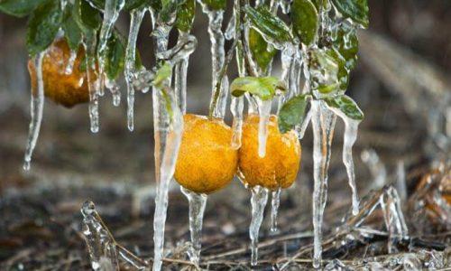 portokalia pagetos